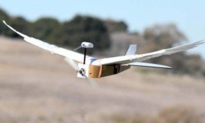 Gerçek güvercin tüylerine sahip uçan robot Gerçek güvercin tüyleriyle donatılmış uçan robot – VİDEO