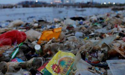 Çevre kirliliği nedeniyle 13 milyon canlı türü tehlikede
