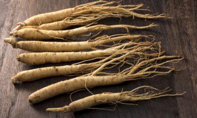 Ginseng nedir? Ginsengin sağlığa 8 faydası ve ginsengin zararları