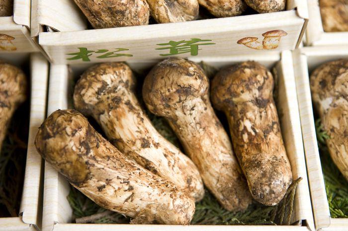 Matsutake mantarının sağlığa faydaları