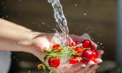Vişne sapının 4 faydası: Vişne sapı çayı