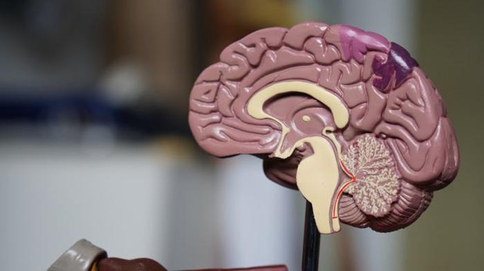 Beyin sisi nedir? Beyin sisini gidermenin 7 yolu