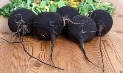 Siyah turpun faydaları nelerdir? Kara turp hangi hastalıklara…