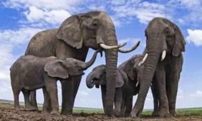 Filleri uzaydan tespit edebilen yapay zeka sistemi