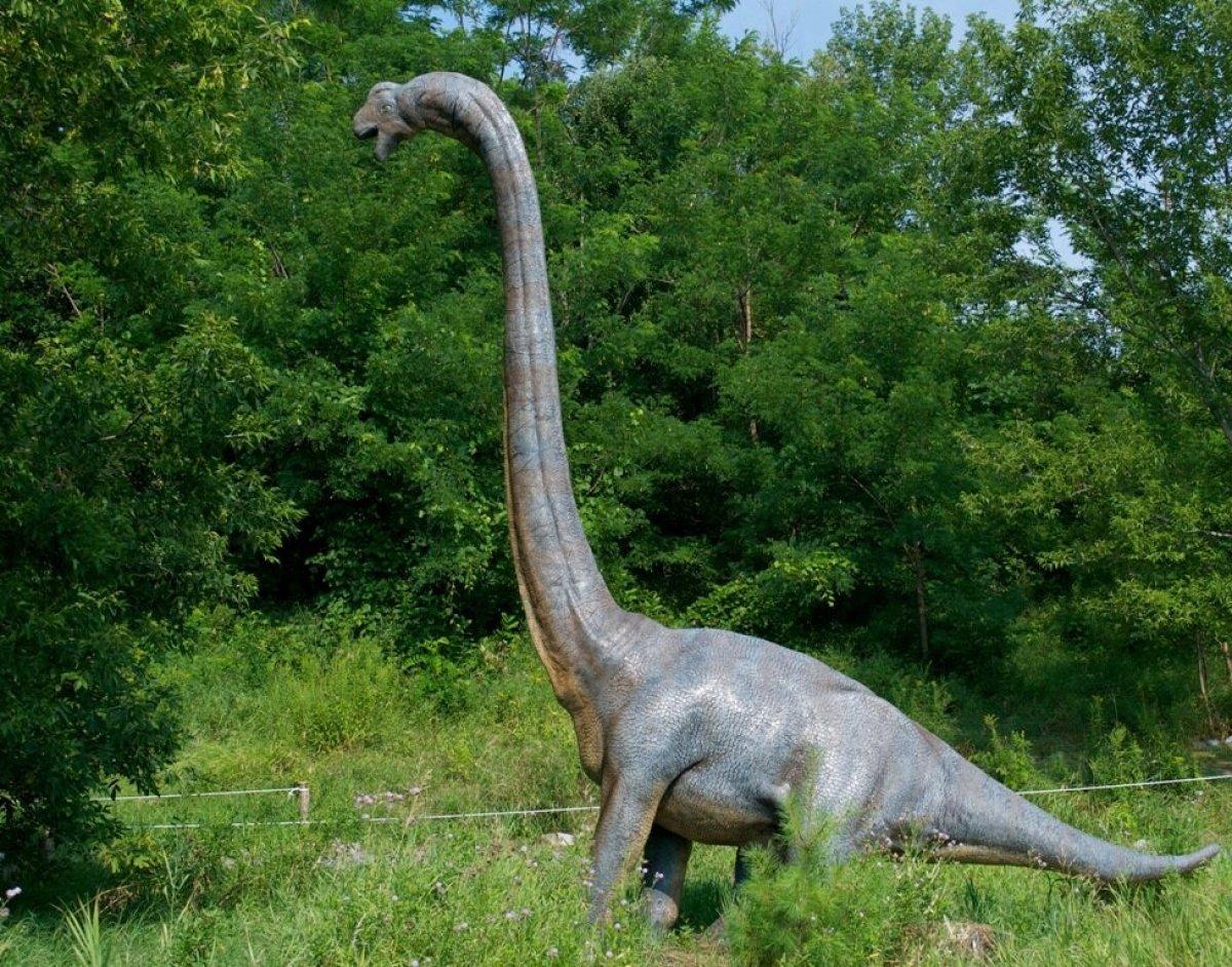 Yaşamış en büyük kara hayvanının fosilleri bulundu