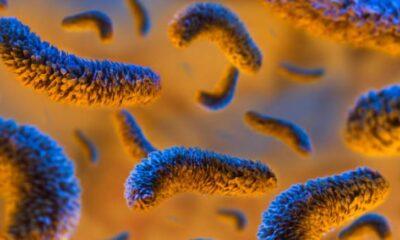 Güney Afrika ve Brezilya virüs mutantlarında farklı bir özellik…