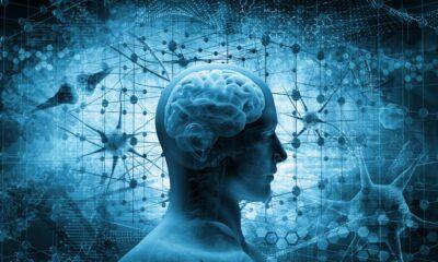Beyni diri ve zinde tutan besinler